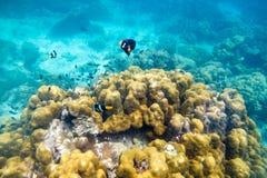 Unterwasserseefisch um Stein Lizenzfreies Stockfoto