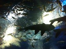 Unterwasserseeparadies Buengchawark Stockbild