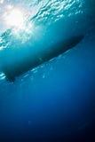 Unterwassersonnenschein unter dem Boot in Derawan, Unterwasserfoto Kalimantan, Indonesien Lizenzfreie Stockfotos