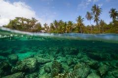 Unterwasserspalte schoss von der Seefelsigen Unterseite Stockfotografie
