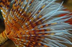 Unterwasserspirograph Stockfotos