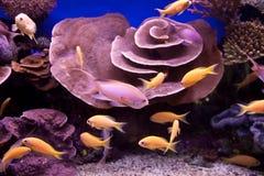 Unterwasserszene Stockfotografie