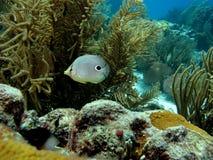 Unterwasserszene Stockbild