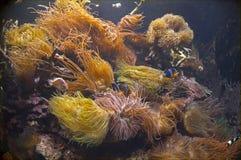 Unterwasserszene Imagenes de archivo