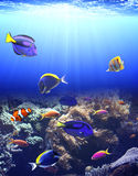 Unterwasserszene mit tropischen Fischen Stockbild