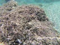 Unterwasserszene, Pelion, Griechenland Lizenzfreie Stockfotos