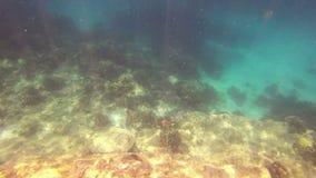 Unterwasserszene in Phuket stock footage