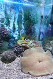 Unterwasserszenen Stockfoto