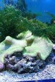 Unterwasserszenen Lizenzfreies Stockbild