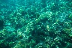 Unterwassertrieb des Korallenriffs Stockfotos