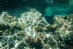 Unterwassertrieb des Korallenriffs Stockbilder