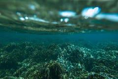 Unterwassertrieb des Korallenriffs Lizenzfreies Stockbild
