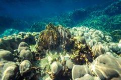 Unterwassertrieb des Korallenriffs Stockbild
