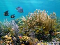 Unterwasserwelt Lizenzfreie Stockfotos