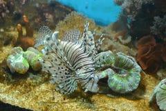 Unterwasserwelt Stockfotografie
