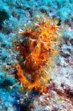 Unterwasserwelt Lizenzfreie Stockfotografie