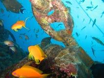 Unterwasserwelt im tiefen Wasser in der Korallenriff- und Betriebsblumenflora dem blaue Weltin den marinewild lebenden tieren, -f stockfoto