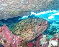 Unterwasserwelt im tiefen Wasser in der Korallenriff- und Betriebsblumenflora dem blaue Weltin den marinewild lebenden tieren, -f stockbilder
