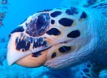 Unterwasserwelt im tiefen Wasser in der Korallenriff- und Betriebsblumenflora dem blaue Weltin den marinewild lebenden tieren, -f lizenzfreie stockfotos