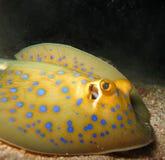 Unterwasserwelt im tiefen Wasser in der Korallenriff- und Betriebsblumenflora dem blaue Weltin den marinewild lebenden tieren, -f stockbild