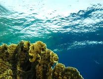 Unterwasserwelt im tiefen Wasser in der Korallenriff- und Betriebsblumenflora dem blaue Weltin den marinewild lebenden tieren, -f stockfotos