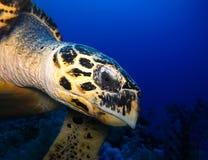 Unterwasserwelt im tiefen Wasser in der Korallenriff- und Betriebsblumenflora in den blaue Weltmarinewild lebenden tieren, Fisch, lizenzfreie stockfotografie