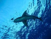 Unterwasserwelt im tiefen Wasser in der Korallenriff- und Betriebsblumenflora in den blaue Weltmarinewild lebenden tieren, Fisch, stockfoto