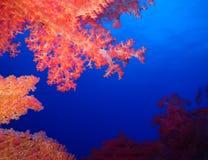 Unterwasserwelt im tiefen Wasser in der Korallenriff- und Betriebsblumenflora in den blaue Weltmarinewild lebenden tieren, Fisch, stockfotografie