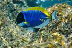 Unterwasserwelt Malediven Stockfotografie