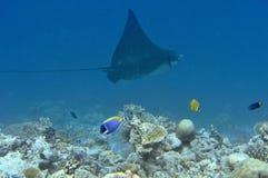 Unterwasserwelt Malediven Lizenzfreies Stockfoto