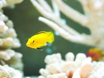 Unterwasserwelt mit Korallen und Fischen Lizenzfreies Stockfoto
