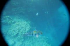 Unterwasserwelt von Fischen stockfotos