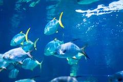 Unterwasserweltlandschaft, buntes Korallenriff mit Fischen Stockbild