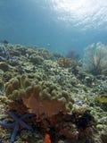 Unterwasserwolrd lizenzfreie stockfotos