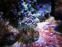 Unterwater世界在巴塞罗那在春天 免版税库存图片