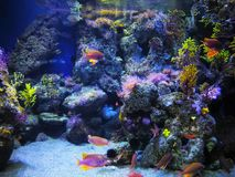 Unterwater world in Barcelona in aquarium stock image