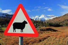 Unterzeichnen Sie für Schafe mit einem Hintergrund von Schnee mit einer Kappe bedeckten Bergen Lizenzfreie Stockfotos