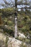 Unterzeichnen Sie herein den Baum stockbild