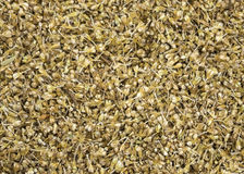 Unthreshed millet still in chaff. Royalty Free Stock Image
