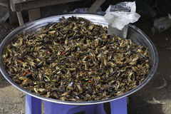 Untitled. Fried grasshoppers,  market of Skun, Cambodia 2013 Stock Photos