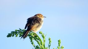 Untitled. Marievale Bird Sanctuary Stock Image