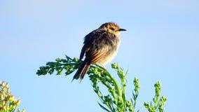 Untitled. Marievale Bird Sanctuary Royalty Free Stock Photography