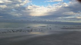 Untouched beach with flock of birds Stock Image