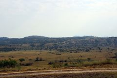 Untouched endless landscape in Africa Uganda. With Fazinierender flora and fauna Royalty Free Stock Photo