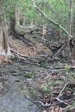 The untouched forest landscape `Bandhavgrah national park` ,india stock image