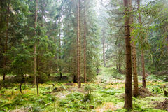 Untouched forest landscape Royalty Free Stock Images