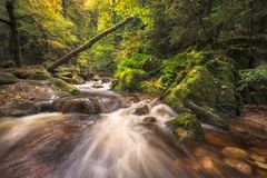 Untouched Green Black Forest River Scenery with river. A Little river Floating through a green untouched valley, Black Forest, Germany royalty free stock photography