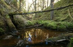 Untouched natural forest with stream and fallen trees. Photographed in sweden Royalty Free Stock Photography