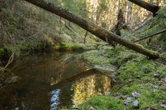 Untouched natural forest with stream and fallen trees. Photographed in sweden Stock Photo