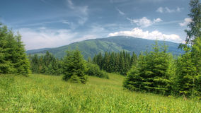 Central european forest. Stock Photography